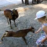 Beskid Śląski dla dzieci. Leśny Park Niespodzianek w Ustroniu