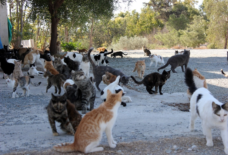 koty,cypr