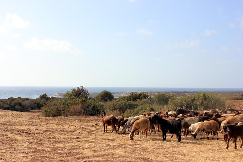 Co warto zobaczyć na Cyprze